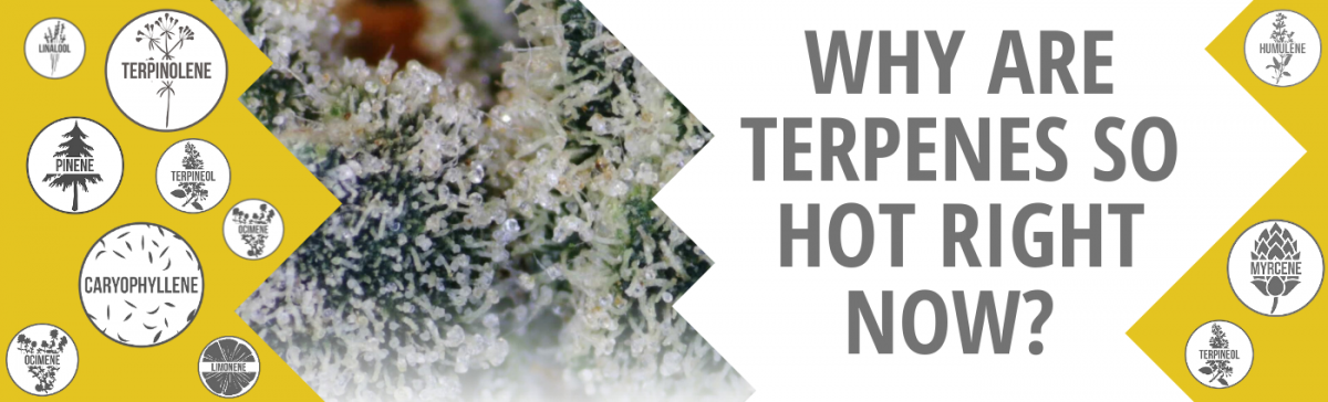 Why Are Terpenes So Hot Right Now?